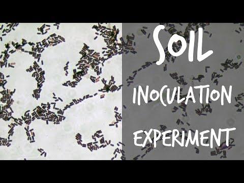 Biofertilizers Experiment: Testing Earth Alive Soil Activator (Part 1)