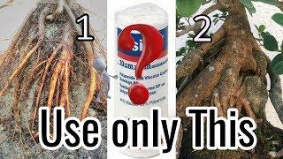 Root over Rock bonsai - Easiest Way