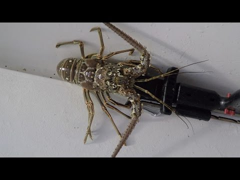 Deadliest Lobster Ep. 3: Finding Lobster when its Tough
