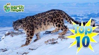 Top 10: Ways Animals Enjoy the Winter