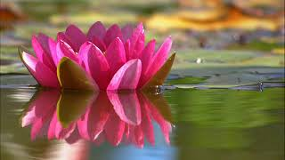 Deep Healing Music for The Body & Soul, Meditation Music, Relaxing Music, Soothing Music