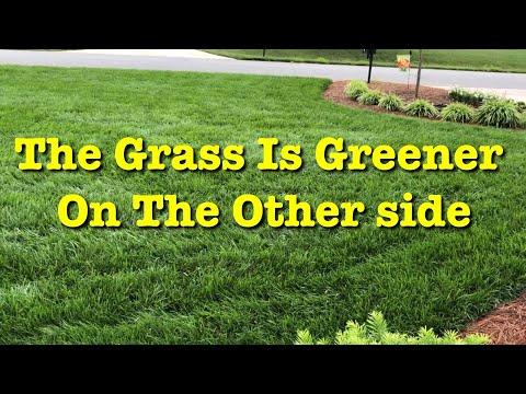 How To Make Grass Greener - Liquid Iron