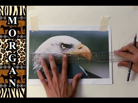 How to Transfer a Drawing / photo to Canvas for Painting - Jason Morgan Wildlife Art