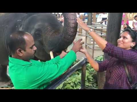 Awesome Pinnawela Elephant Orphanage Camp Srilanka- Dont Miss it!!!!!!!!!