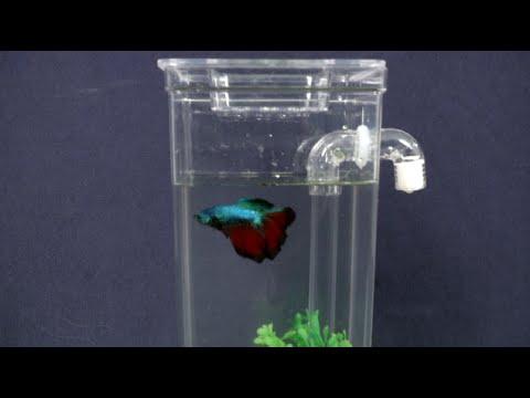 My Fun Fish Tank from Hampton Direct