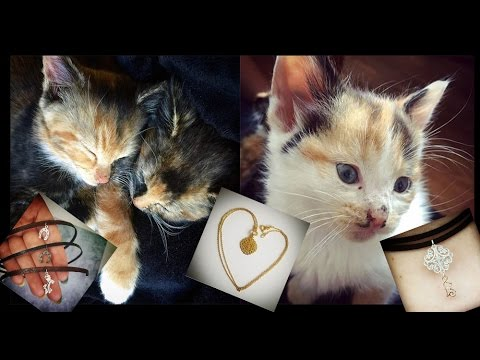 Meet our FOUR Kittens & my new Jewellery | LetzMakeup