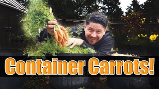 How To Grow Carrots In Containers - The Definitive Guide