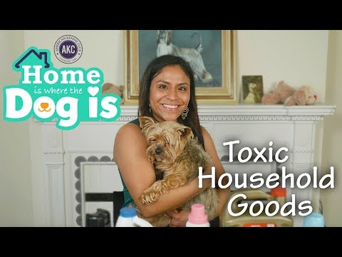 Episode 2 - Toxic Household Goods - AKC's Home is Where the Dog is