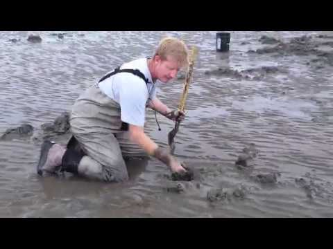 Clam Digging in Alaska
