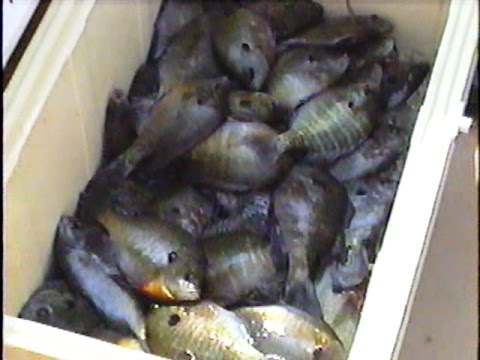 Fishing the Bream Beds! Old Video from the Archives...