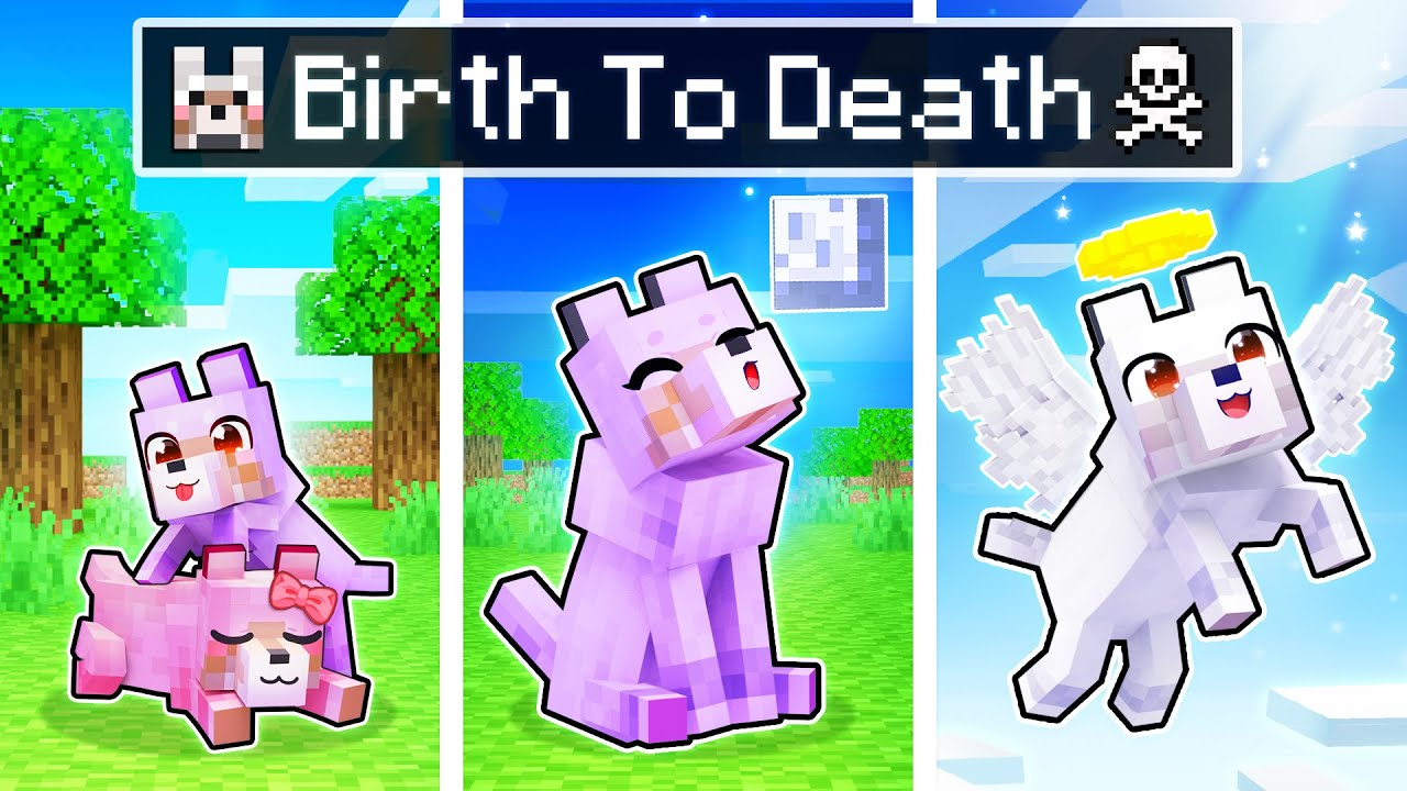 The BIRTH to DEATH of a Minecraft Wolf!