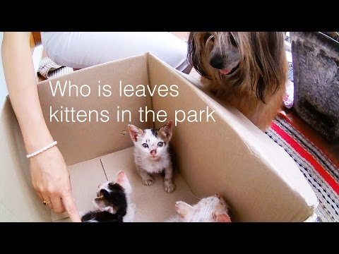 WHO IS LEAVES KITTENS IN THE PARK?