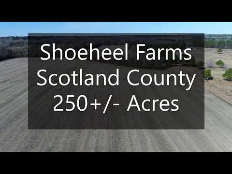 250 Acres of Farm and Timber Land For Sale in Scotland County NC!