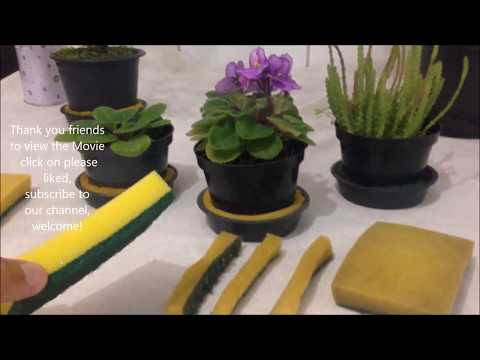 How To Recycle Your Old Sponge - use in your Plants Flowers | Recycling | DIY