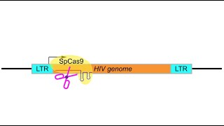 Editing HIV out of our genome with CRISPR