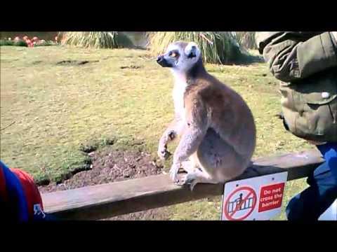 Blackpool zoo vlog