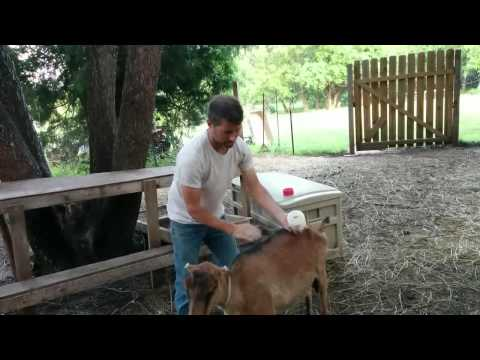 Applying Diatomaceous Earth To Animals
