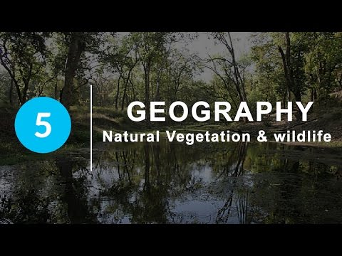 Natural Vegetation and Wildlife - Chapter 5 Geography NCERT class 9