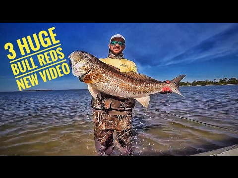 Fishing for and Catching 3 HUGE Bull Redfish