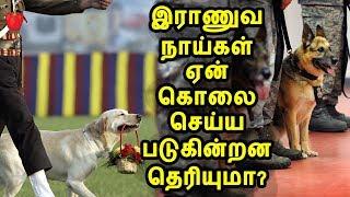 ஓய்வு பெறும் இந்திய இராணுவ நாய்கள் கொலை செய்யப்படுவது ஏன்?   Indian Army Dogs   kudamilagai