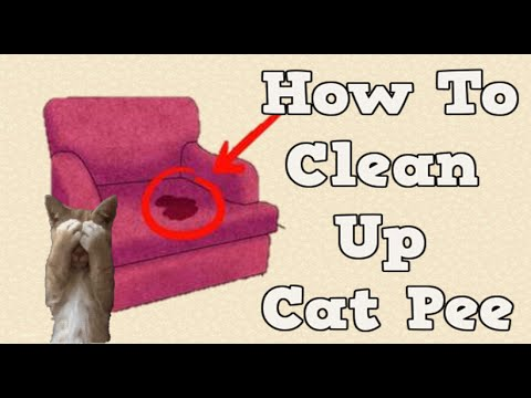 Getting Rid Of Cat Pee Smell, How To Clean Cat Urine, Removing Cat Urine From Carpet