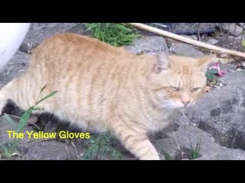 how to keep cats out of the garden- SOLVED