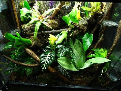 Crested Gecko Vivarium Build #2