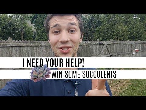 Garden Update Video Series Pt. 3  - ID MY PLANTS TO WIN SUCCULENTS!