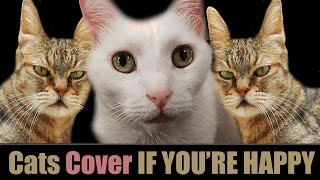 IF YOU'RE HAPPY AND YOU KNOW IT - CATS COVER
