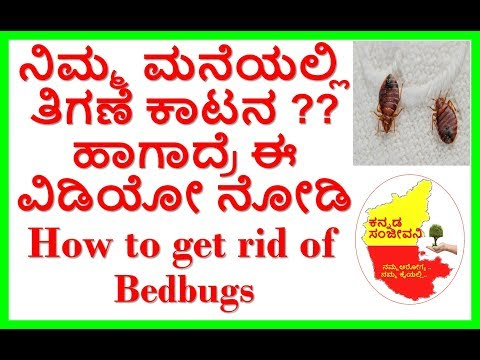 How to get rid of Bed Bugs Naturally..Kannada Sanjeevani.