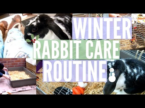 WINTER RABBIT CARE ROUTINE: Morning To Evening | RosieBunneh