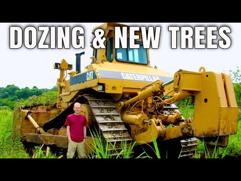 Dozing & Tree Sale (2011)