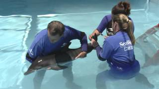SeaWorld Orlando rescues a baby dolphin