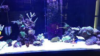 Aqua Reef 395 Update #4 Sps Reef