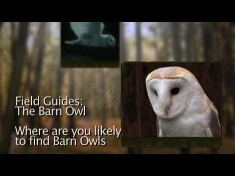 Where to find Barn Owls