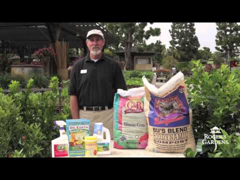 Growing Citrus in Southern California  with David Rizzo