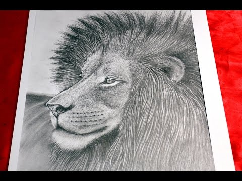 Art Lesson:  How to Draw a Lion with Graphite Pencils