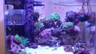Reef Tank Update # 9 New Fish And Corals