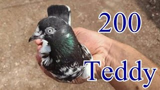 lahore original teddy Videos - 9tube tv
