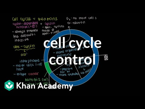 Cell cycle control   Cells   MCAT   Khan Academy
