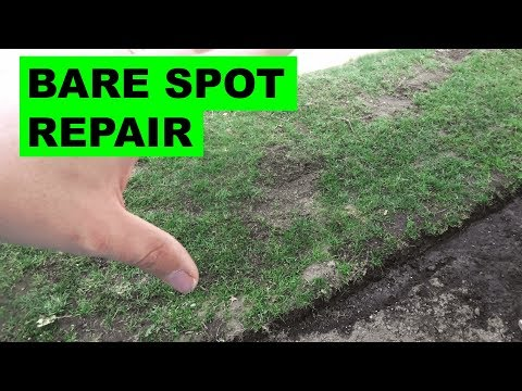 How to repair bare spots in the lawn the easy way