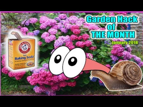 Add Baking Soda to your Flowers Plants Trees Vegetables and it will be Very Rewarding Gardening Hack