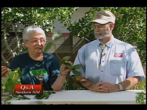 How To Identify Problems With Plants & Shrubs - Vines, etc.