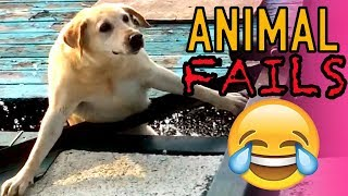 INSANE ANIMAL FAILS AND BLOOPERS!   Viral Animal Fails Caught On Camera!!   Mas Supreme