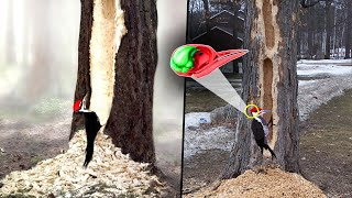 Why Don't Woodpeckers Get Concussions?   What Happens When A Woodpecker Cant Find Food