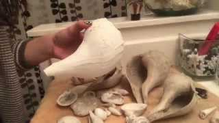 Bleaching My Seashells!
