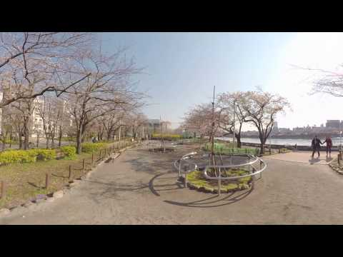【360°】Cherry blossom of the Sumida River together with the view of the TOKYO SKYTREE.