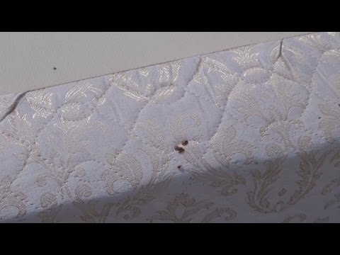 Angie's List on bed bug epidemic