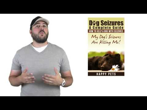 How to help a dog with seizures /Canine epilepsy
