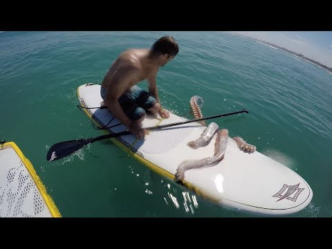 Giant squid wraps its tentacles around my paddle board!